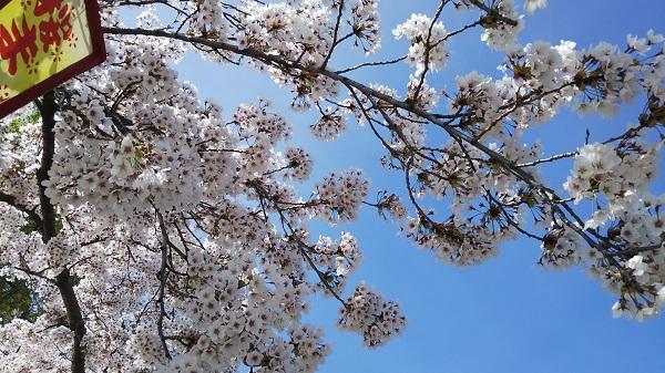 花見-2_m